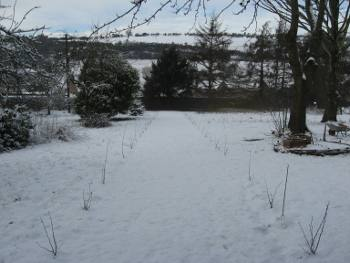 Recently planted Nut Walk in the first snows